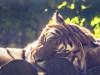 serengeti31